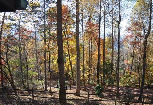 whispering-woods-cabin (17).jpg