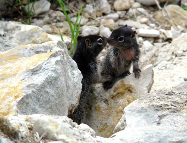 10-rock-squirrel-kiss_20117753796_o.jpg