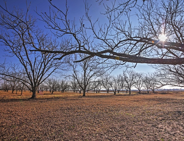 6 acre pecan orchard