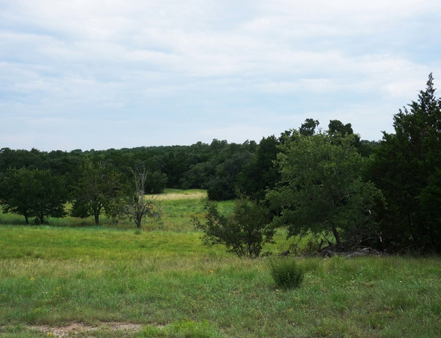 Wooded views of the pasture land.