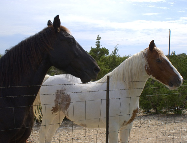 Friendly horses on the property