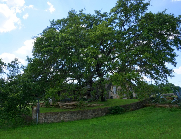 Gorgeous grounds with old oaks surround the house.