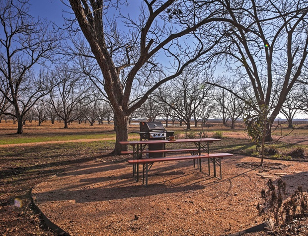 View of the pecan orchard from the house