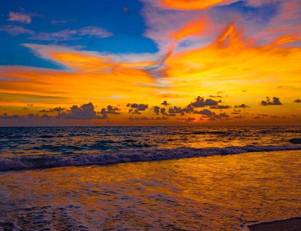 Anna Maria Island Beach Palms 2A