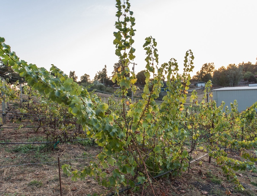 New Growth Vineyard